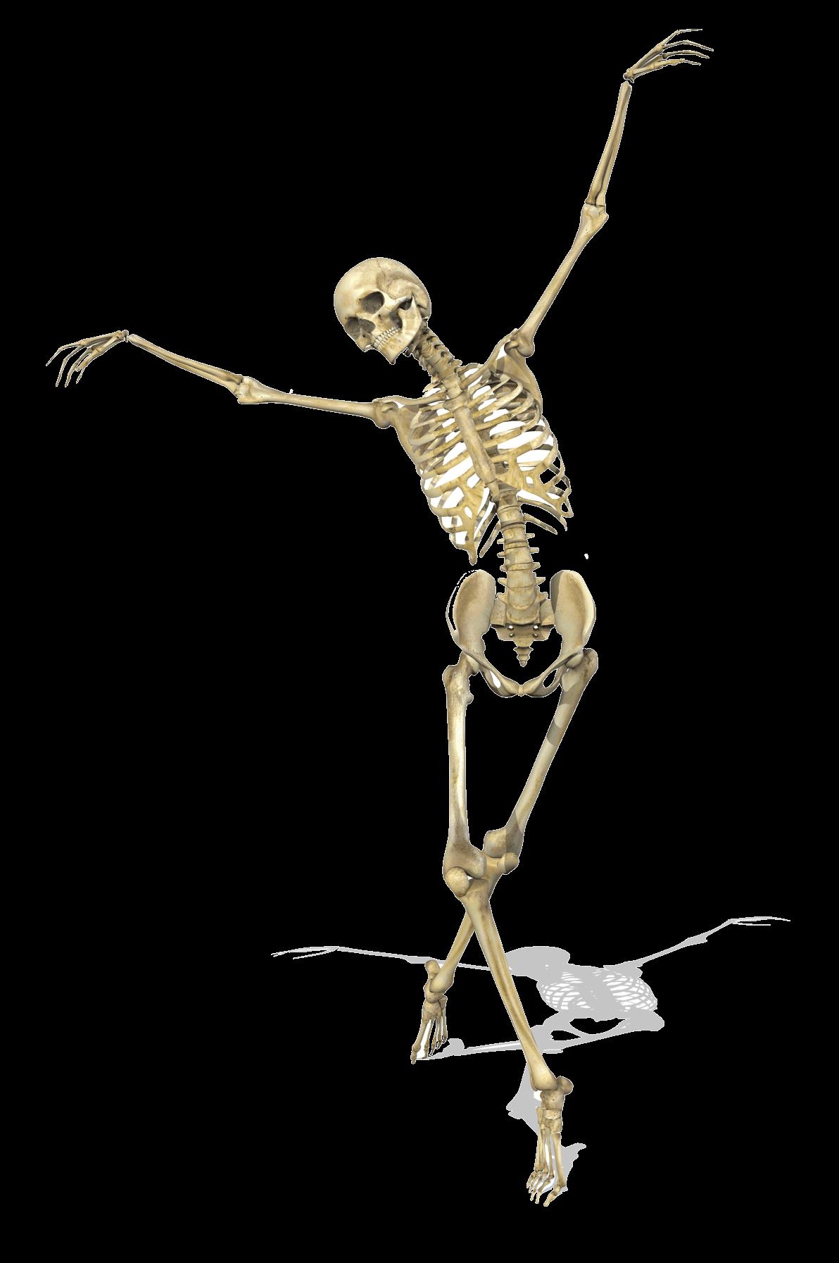 Niedlich Menschliche Skelettteile Ideen - Menschliche Anatomie ...